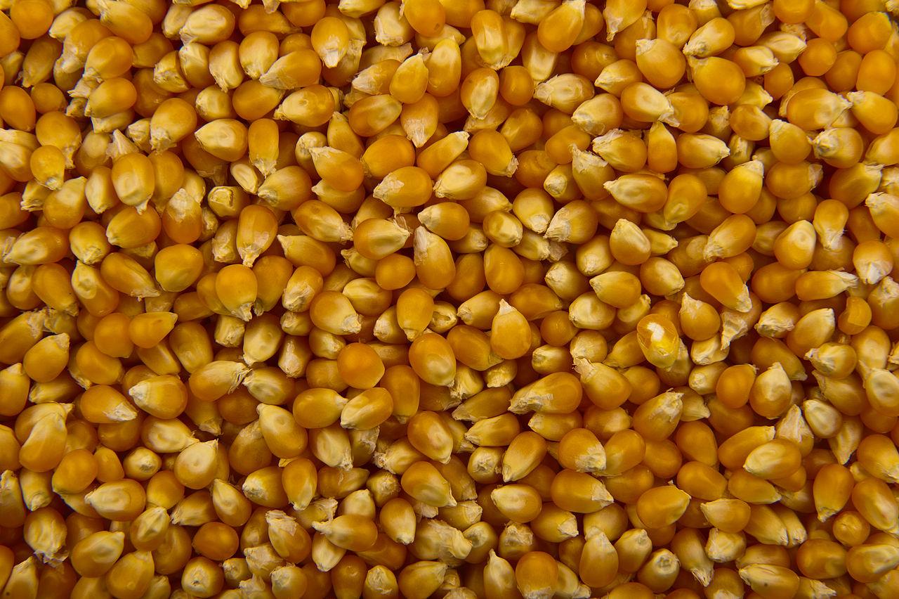 Name:  Unpopped_Popcorn.jpg Views: 355 Size:  290.1 KB
