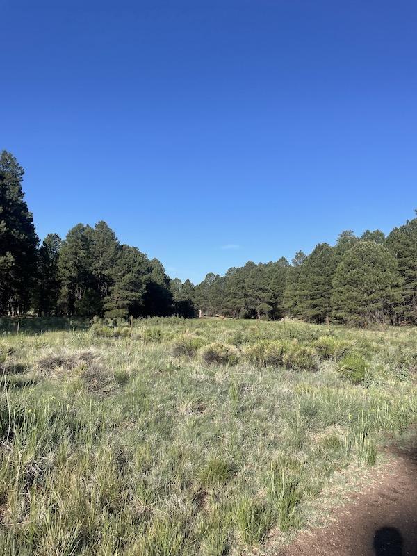 Name:  Flagstaff meadow.jpeg Views: 246 Size:  172.0 KB