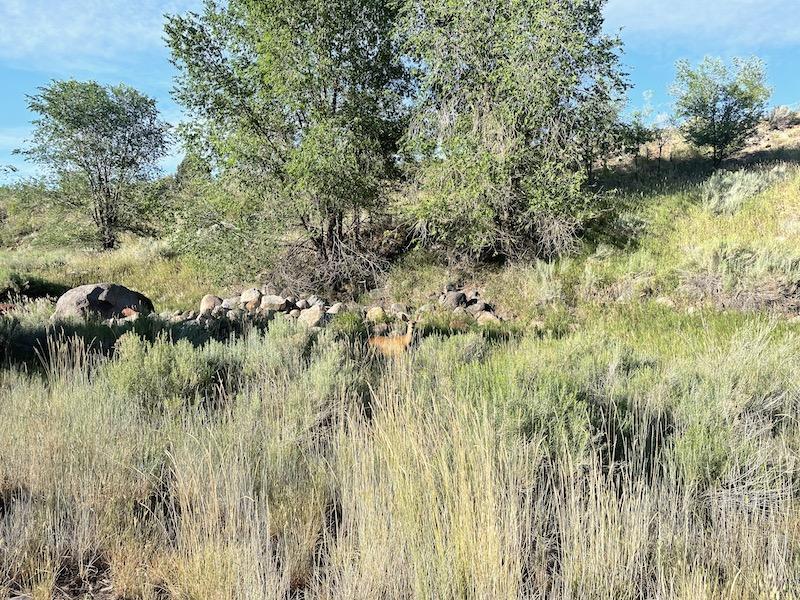 Name:  Durango Run deer.jpeg Views: 235 Size:  307.8 KB