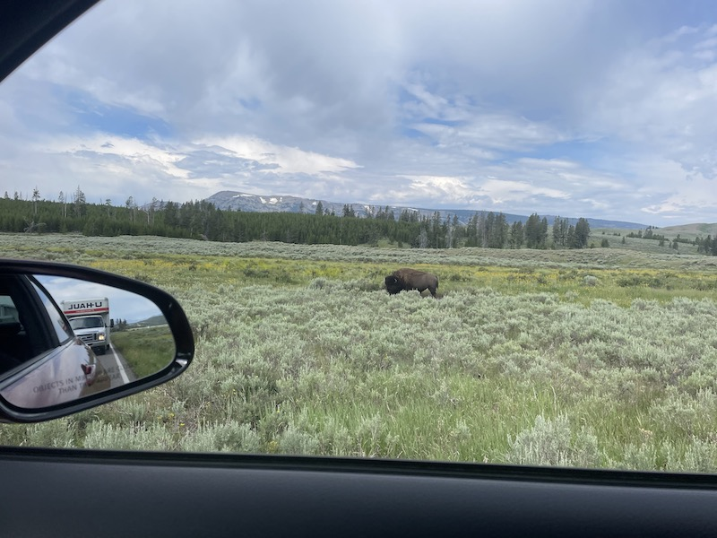 Name:  Bison to the right.jpeg Views: 229 Size:  140.6 KB