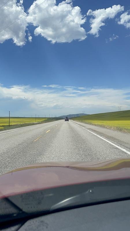 Name:  Mustard Fields.JPG Views: 226 Size:  85.0 KB